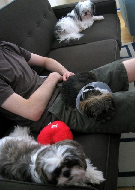 3 boys couch